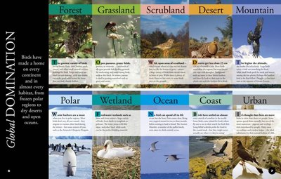 Birds: Everything You Need to Know