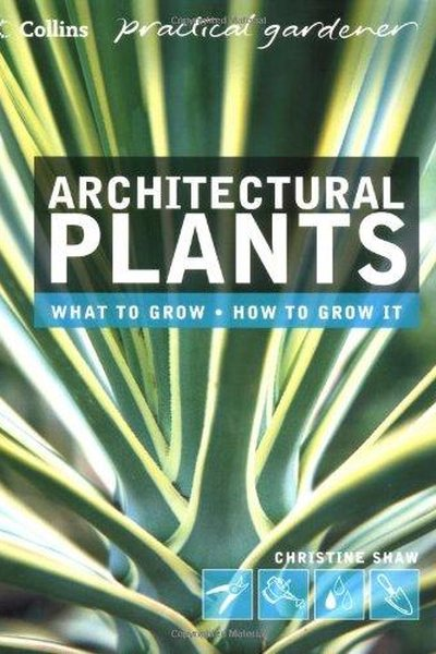 Architectural Plants: What to Grow, How to Grow